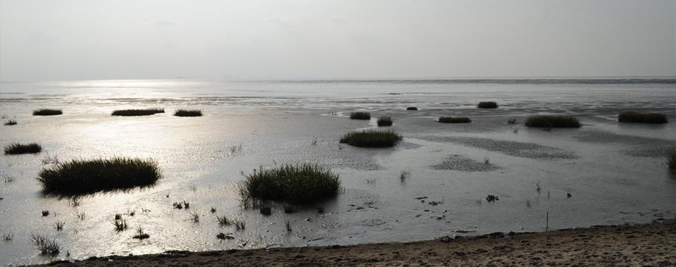 Das Wattenmeer, eine faszinierende  Naturlandschaft